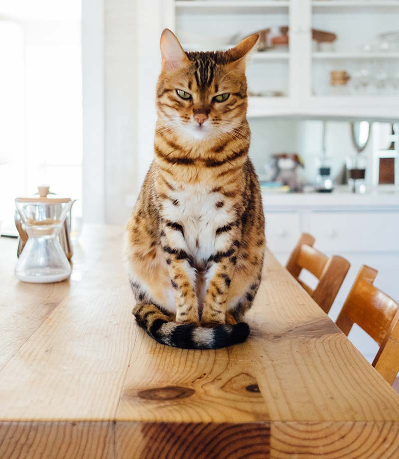 A cat sits on top of a table in a bright home